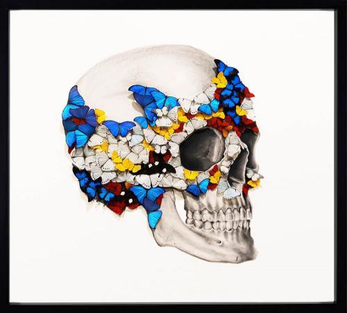 Profile Right Skull